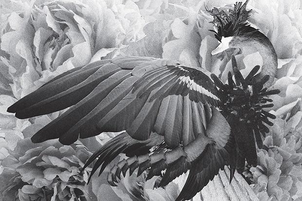 Премьера двух треков с нового альбома Муджуса «Metamorphosis»