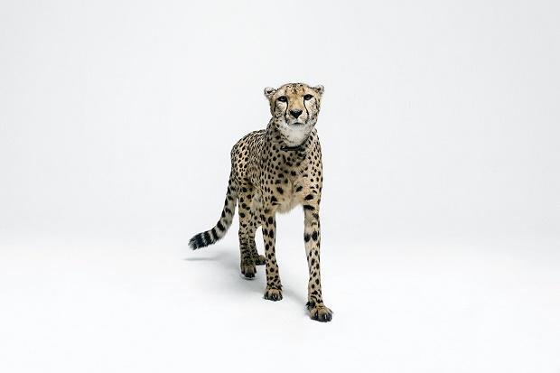Новый лукбук Tubelaces x Sûr Style Safari 2014